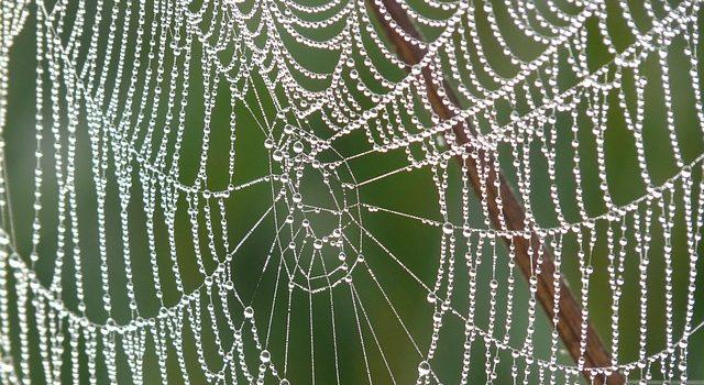 Spinnen Raumklima