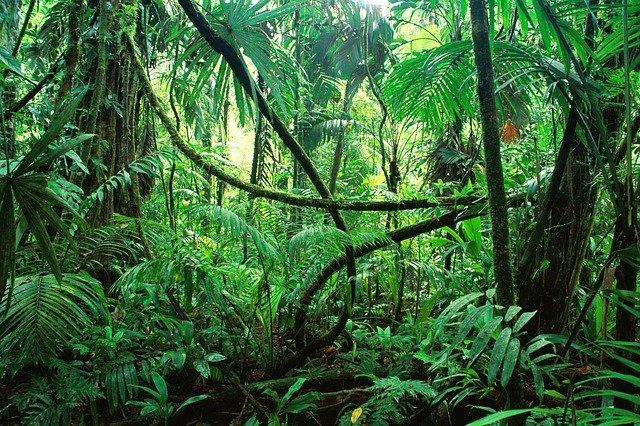 Luftfeuchtigkeit-Definition-Dschungel